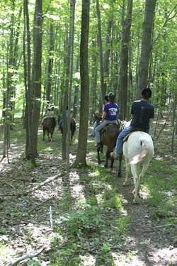 Horse Back Riding and Neck Pain