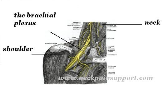 Brachial plexus black and white