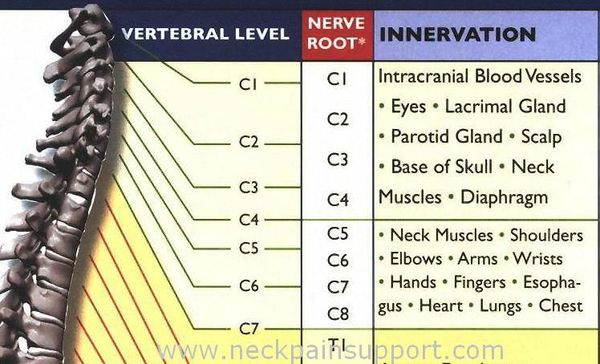 Common Neck Conditions And The Nerve Level That Controls