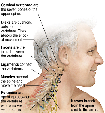 Most Important Function Of C Spine Neck Pain Support Blog