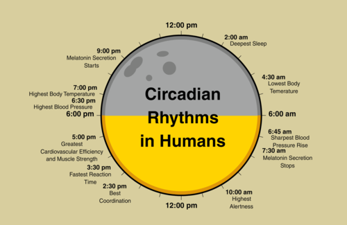 Circadian rhythms are affected by electronic devices such as cell phones and tablets