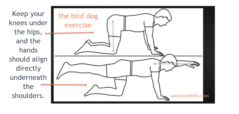 Bird dog pose for low back stronger