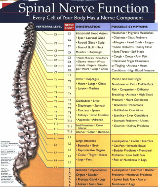 Spinal nerve chart picture